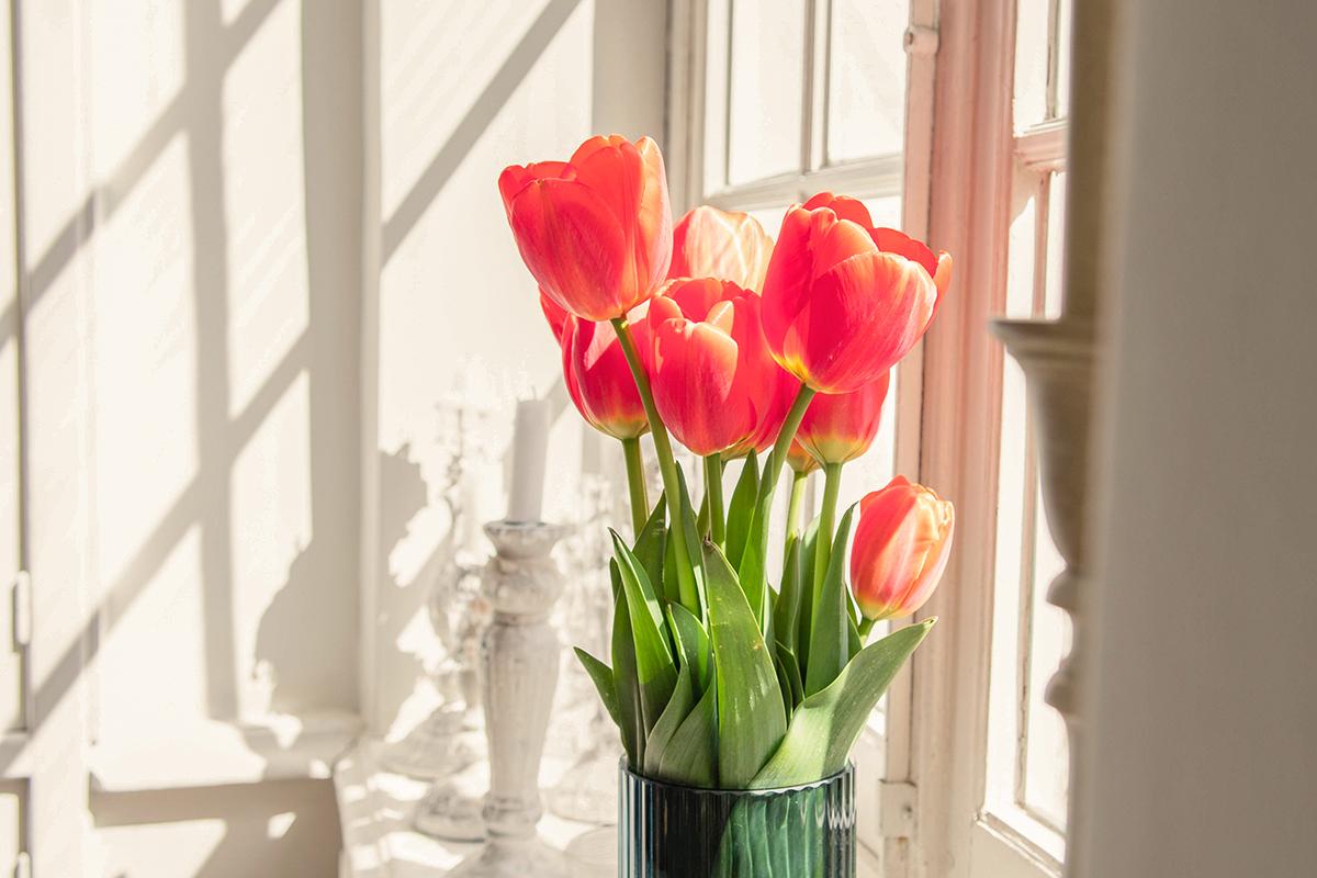 Tulpen sfeerbeeld Mildheid